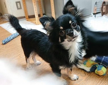 f:id:dog_life_saving:20201023114751j:plain