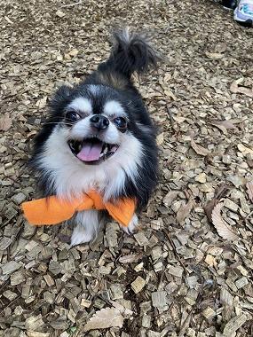 f:id:dog_life_saving:20201023114958j:plain