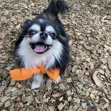f:id:dog_life_saving:20201023115007j:plain