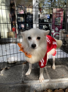 f:id:dog_life_saving:20201223140538j:plain
