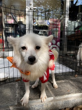 f:id:dog_life_saving:20201223140550j:plain