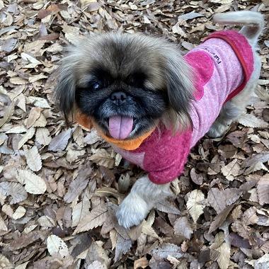 f:id:dog_life_saving:20201223140644j:plain
