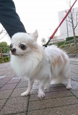 f:id:dog_life_saving:20201223140729j:plain