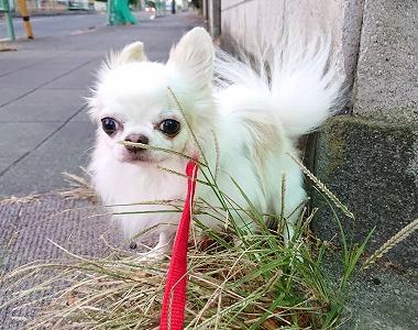 f:id:dog_life_saving:20201223140736j:plain