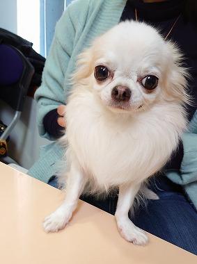 f:id:dog_life_saving:20201223140743j:plain