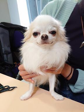 f:id:dog_life_saving:20201223140750j:plain