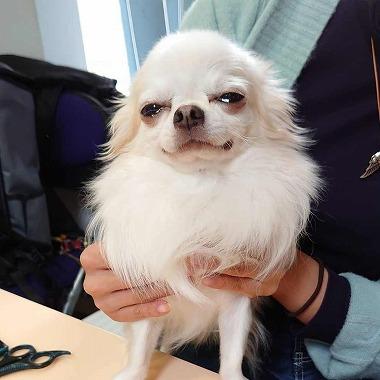 f:id:dog_life_saving:20201223140800j:plain