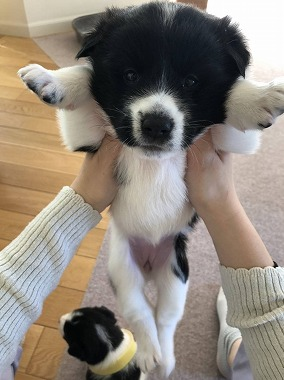 f:id:dog_life_saving:20201223140927j:plain