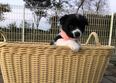 f:id:dog_life_saving:20201223140935j:plain