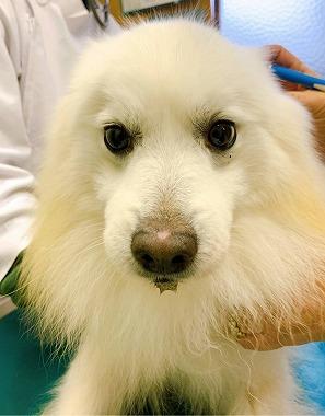 f:id:dog_life_saving:20210212100121j:plain