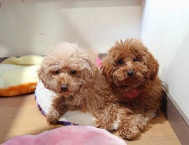 f:id:dog_life_saving:20210212100218j:plain