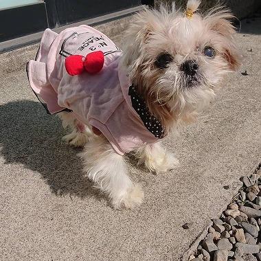 f:id:dog_life_saving:20210212100548j:plain