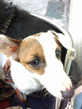 f:id:dog_life_saving:20210212100615j:plain