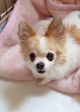 f:id:dog_life_saving:20210215125335j:plain