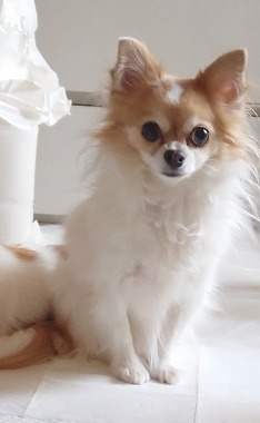 f:id:dog_life_saving:20210309112959j:plain