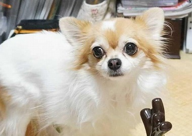 f:id:dog_life_saving:20210309113009j:plain