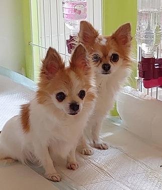f:id:dog_life_saving:20210309113021j:plain