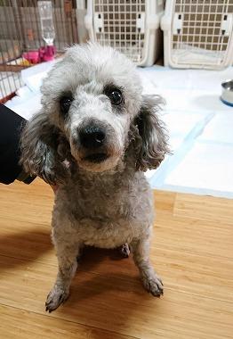 f:id:dog_life_saving:20210331145206j:plain