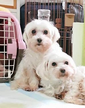 f:id:dog_life_saving:20210331145422j:plain