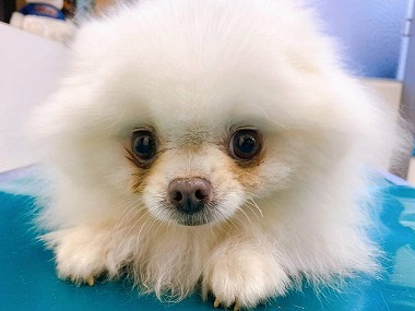 f:id:dog_life_saving:20210331145443j:plain