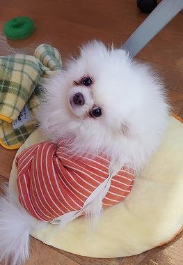 f:id:dog_life_saving:20210331145453j:plain