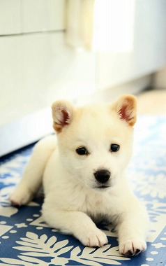 f:id:dog_life_saving:20210331145510j:plain