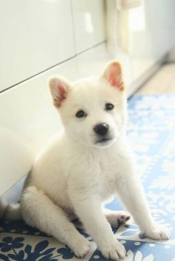 f:id:dog_life_saving:20210331145520j:plain