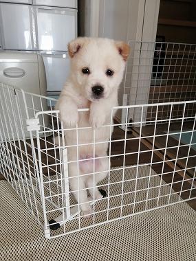 f:id:dog_life_saving:20210331145539j:plain