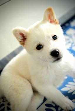 f:id:dog_life_saving:20210331145547j:plain