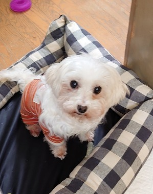f:id:dog_life_saving:20210402124412j:plain