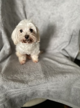 f:id:dog_life_saving:20210409111259j:plain