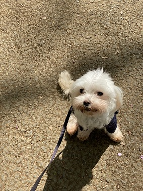 f:id:dog_life_saving:20210409111308j:plain