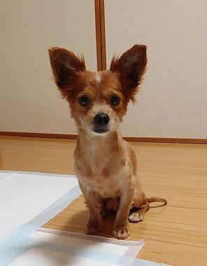 f:id:dog_life_saving:20210604152502j:plain