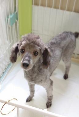 f:id:dog_life_saving:20210604152606j:plain