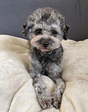 f:id:dog_life_saving:20210604152912j:plain