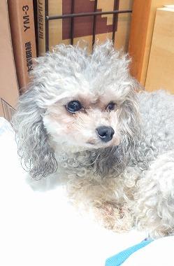 f:id:dog_life_saving:20210604152933j:plain