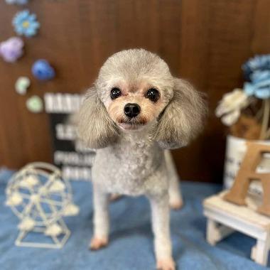 f:id:dog_life_saving:20210604152941j:plain