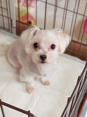 f:id:dog_life_saving:20210604193407j:plain