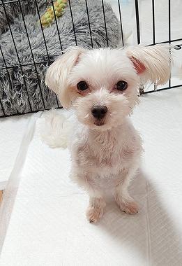 f:id:dog_life_saving:20210604193418j:plain