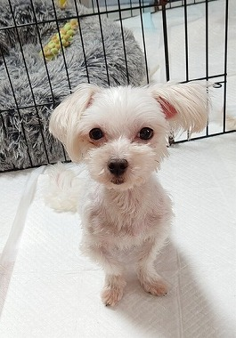 f:id:dog_life_saving:20210604193428j:plain