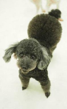 f:id:dog_life_saving:20210608125636j:plain