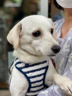 f:id:dog_life_saving:20210608125736j:plain