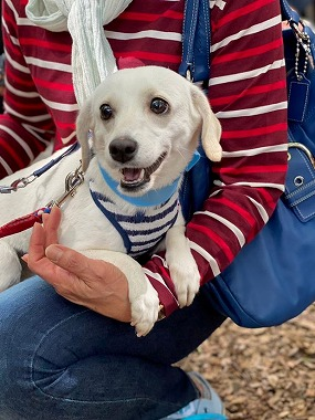 f:id:dog_life_saving:20210608125744j:plain