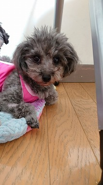 f:id:dog_life_saving:20210609122357j:plain