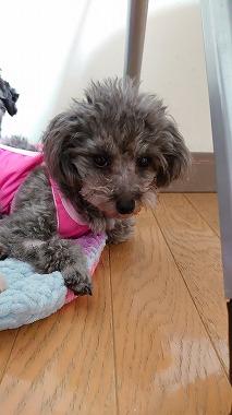 f:id:dog_life_saving:20210609122406j:plain