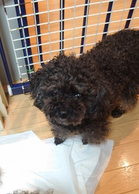 f:id:dog_life_saving:20210609124201j:plain
