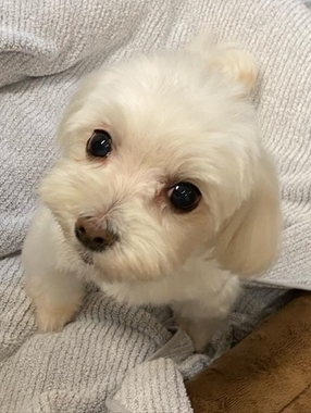 f:id:dog_life_saving:20210630015633j:plain