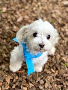 f:id:dog_life_saving:20210630015809j:plain