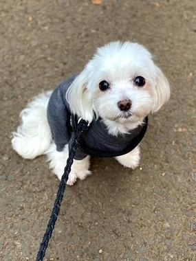 f:id:dog_life_saving:20210630020601j:plain