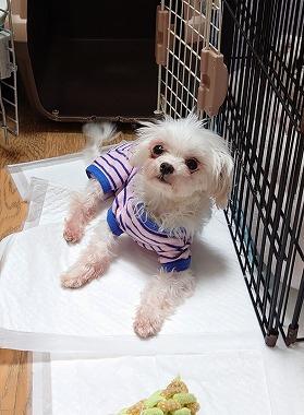 f:id:dog_life_saving:20210720100820j:plain
